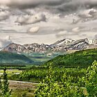 In  Denali National Park by Vickie Emms