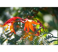 Colours of Summer I - Hot Orange & Cool Green Photographic Print