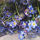 Forget-Me-Nots Wrapped by Barbara Wyeth