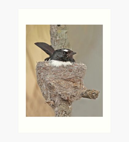 Nesting Willy Wagtail Art Print