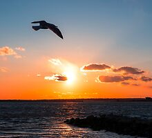 Surreal Stonington Sunsets by JoeGeraci