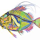 John dory fish by Paul CESSFORD
