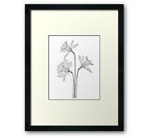B&W Dafodils Framed Print
