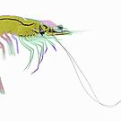 COLOURFUL PRAWN by Paul CESSFORD