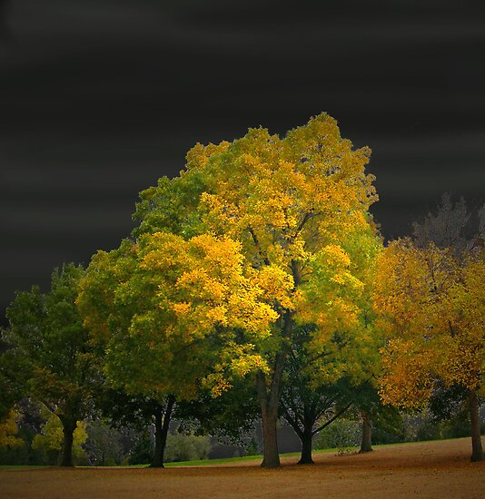 658 by peter holme III
