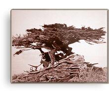 Sepia Cypress Metal Print