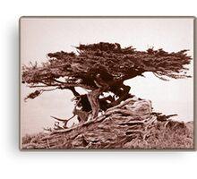 Sepia Cypress Canvas Print