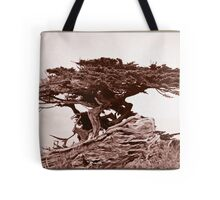 Sepia Cypress Tote Bag