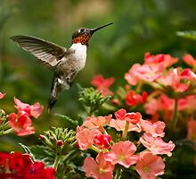Graceful Garden Hummingbird by Christina Rollo