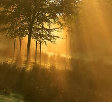 England : Shower of Gold by Angie Latham