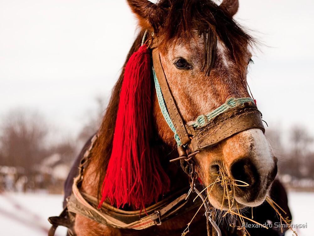 Horse by Alexandru Simionesei