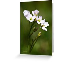 White Cuckoo Flowers Greeting Card
