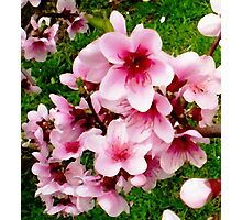 Water Color effect of Spring Blossom Photographic Print