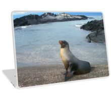 Galapagos Sea Lion Laptop Skin