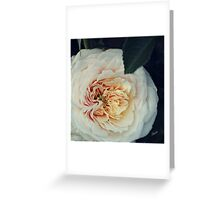 Old Fashion Rose Greeting Card