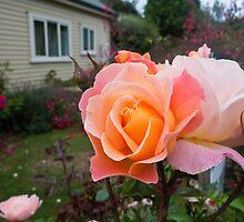 Blooming Garden by HelenPadarin