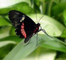Butterfly Fun by ienemien
