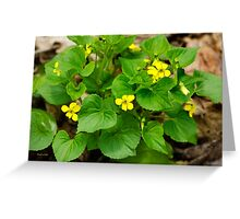 Yellow Violets Greeting Card