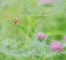 Spider, Web, & Clover by April Koehler