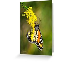 Monarch Butterfly on Goldenrod Greeting Card