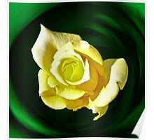 Lemon & Lime Rose Poster