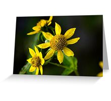 Nodding Bur Marigold Wildflowers Greeting Card