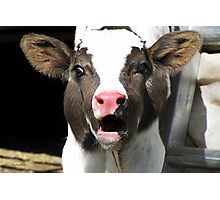Dairy Cow Photographic Print