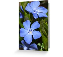 Blue Vinca Flowers Greeting Card