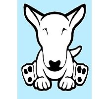English Bull Terrier Strange Sit  Photographic Print