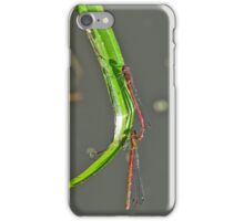 Two small red dragonflies mating iPhone Case/Skin