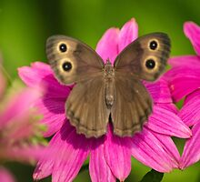 Pretty Butterfly with Flowers by Christina Rollo