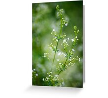 Bedstraw Wildflowers Greeting Card