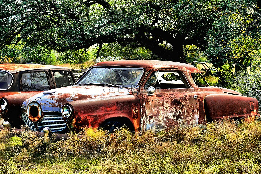 Sign's Of Extreme Neglect     ( BoneYard Series ) by Carla Jensen