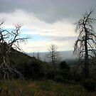 Mesa Verde up top by brucecasale