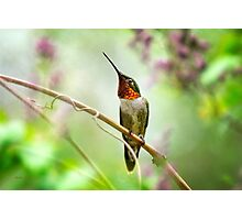 Hummingbird Looking for Love Photographic Print