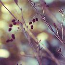 Winter Berries by Maureen Kay