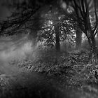 Deep in the Mist by Richard Mason