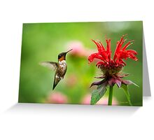 Hummingbird Hovering with Flowers Greeting Card