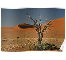 Dead tree and dunes Poster