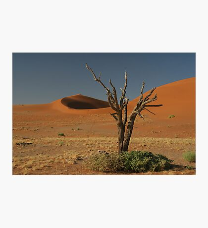 Dead tree and dunes Photographic Print