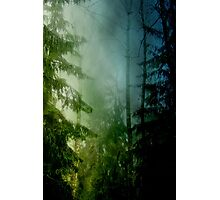 Blue pines Photographic Print