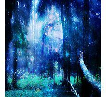 Blue night wood Photographic Print