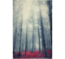 Black forest Photographic Print