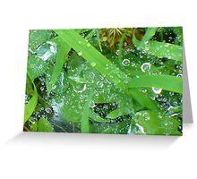 Dew Drop In Greeting Card