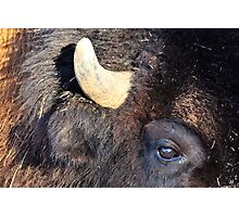 Bison Closeup Photographic Print