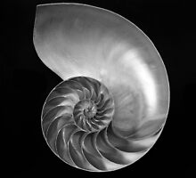 Nautilus Shell, Spirals Series by Summicron