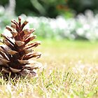 Fir Cone In Summer by samsimpson