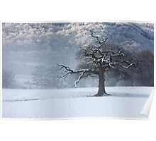 Maentwrog tree - North Wales Poster