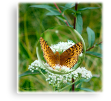 Butterfly Bubble Canvas Print