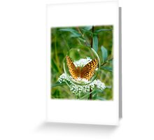 Butterfly Bubble Greeting Card